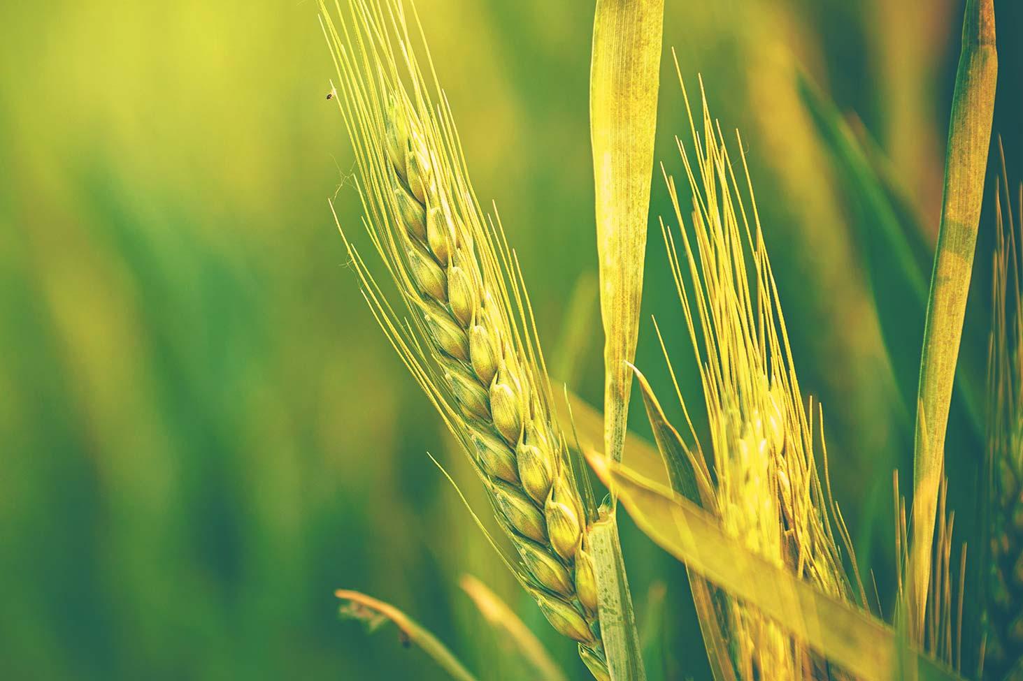 Új, kiemelt támogatású és emelt hitelösszegű Agrár Széchenyi Kártya indul 1