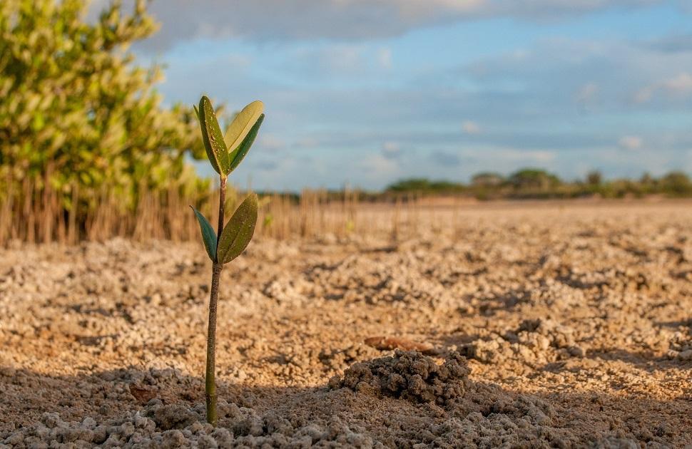 növény szántóföld