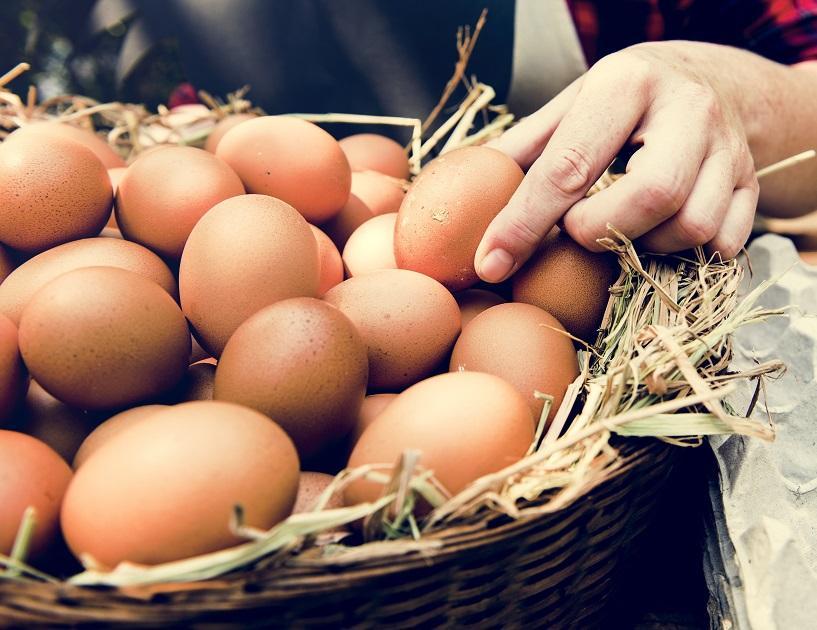kosár tojás