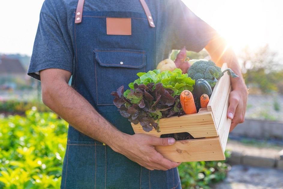 zöldség gazda