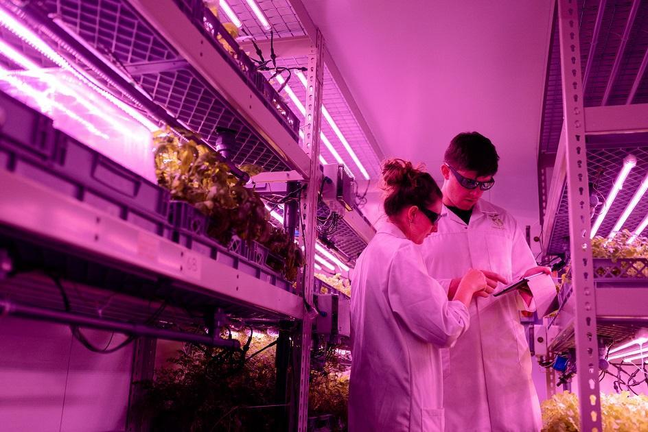 növénytermesztés, technológia