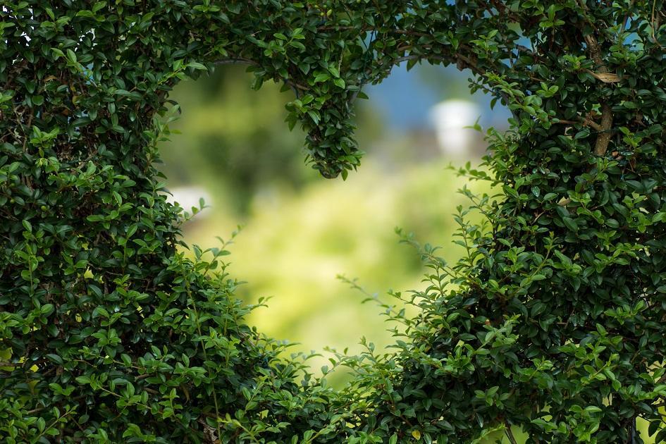 zöld, szív, egészséges