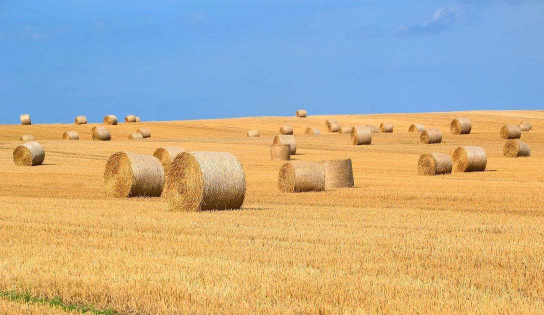 termőföld, bála, aratás, gabona