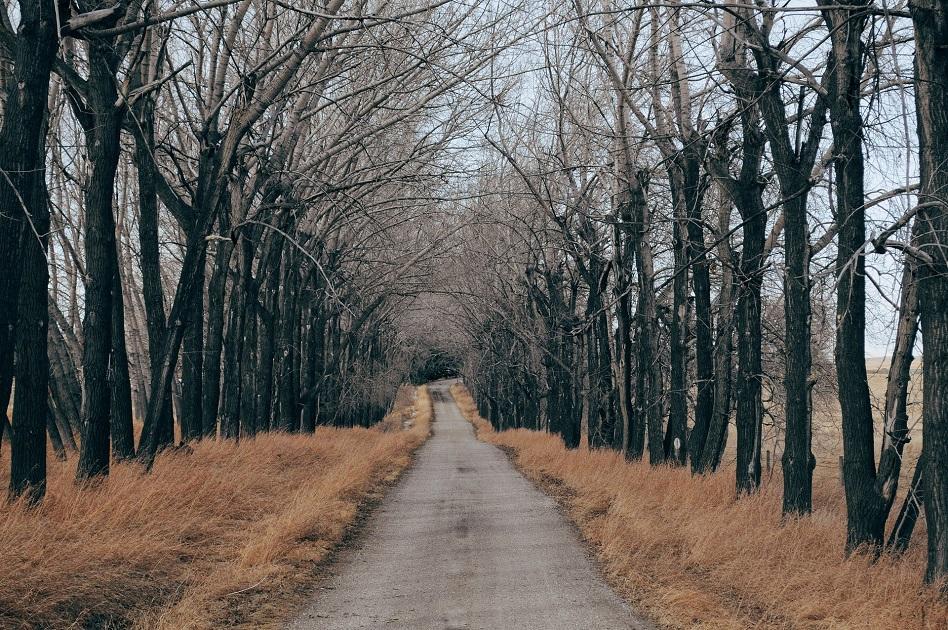 fejlesztés, régi út, vidék, kietlen