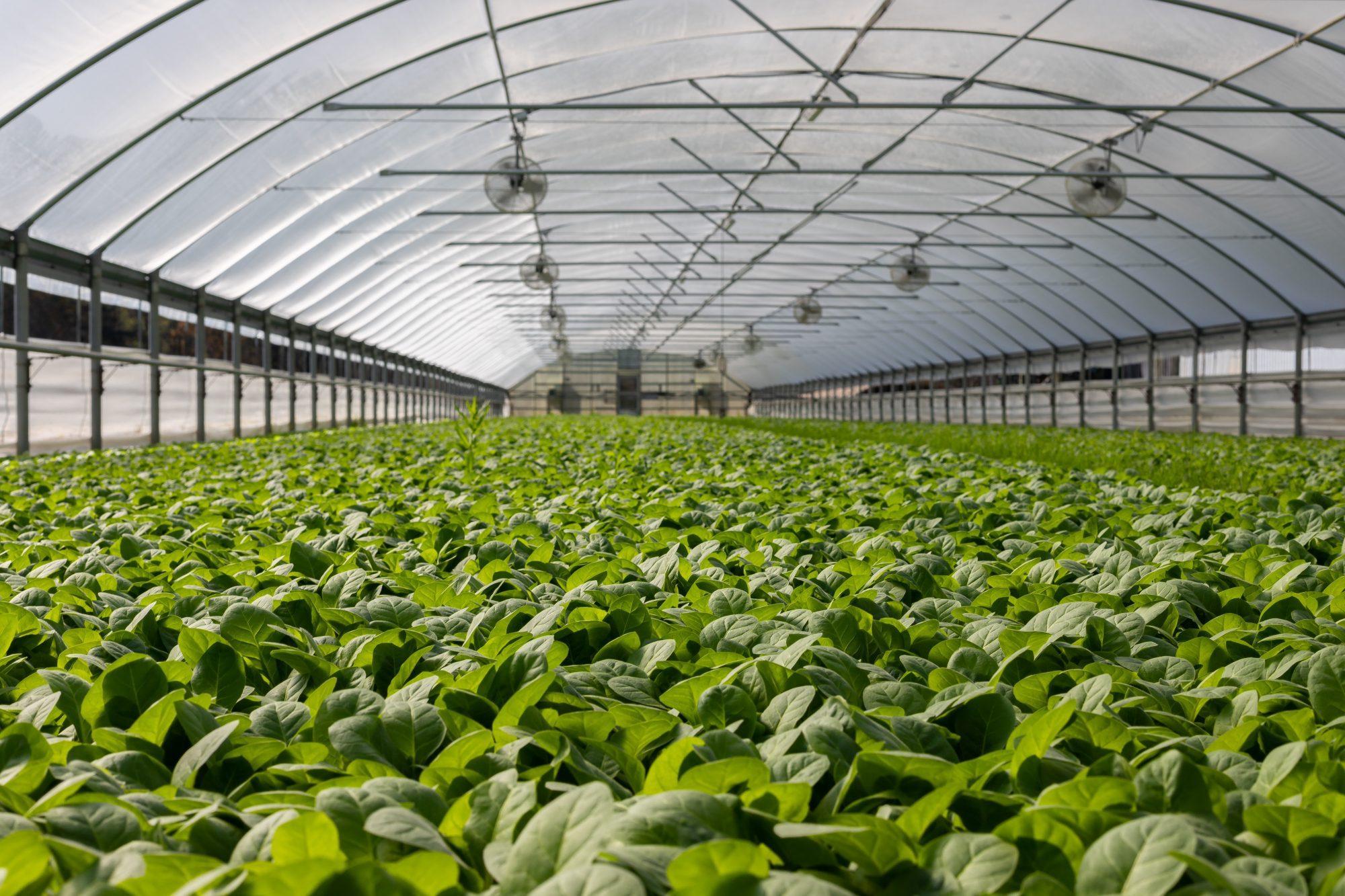 kertészeti üzem