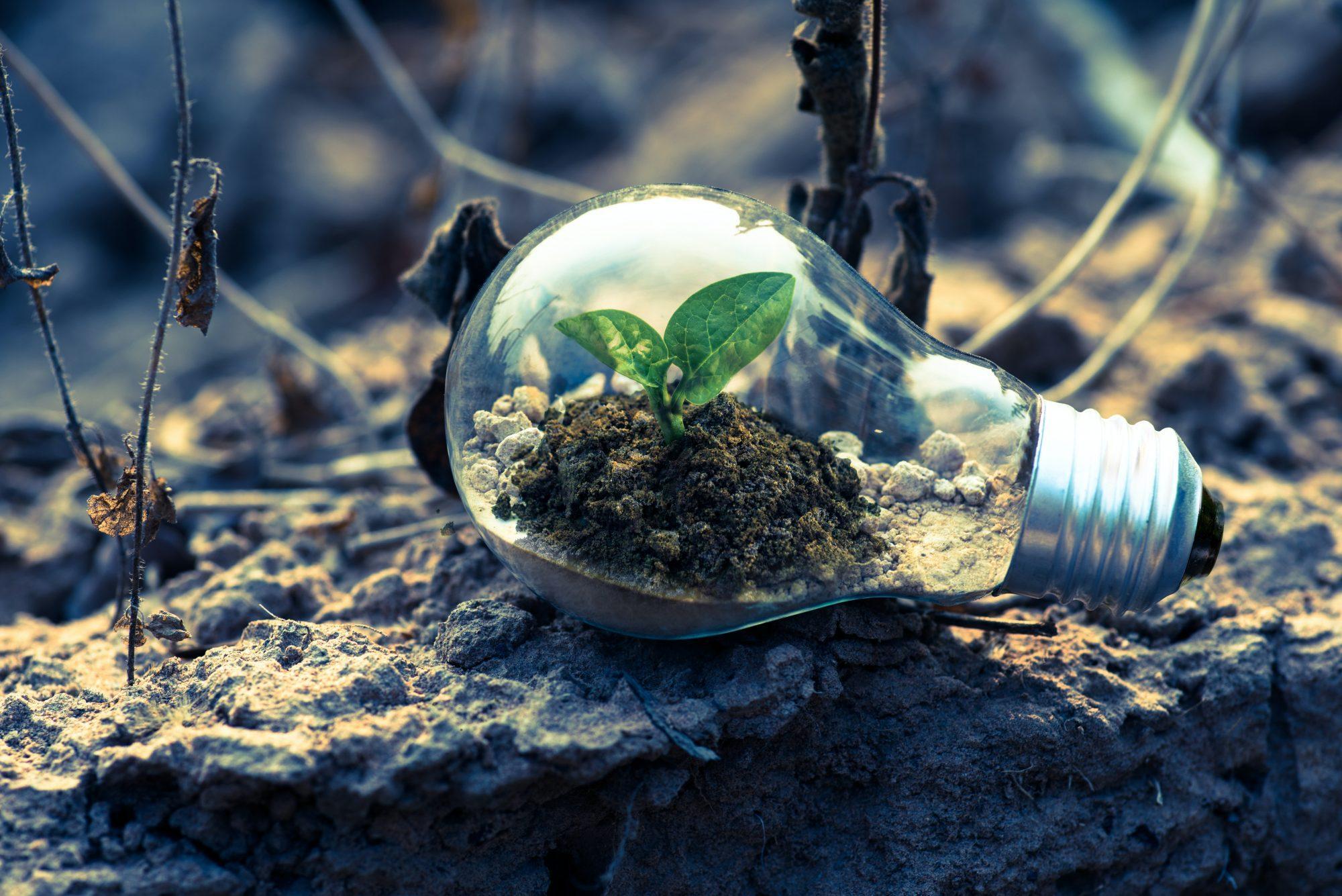 megújuló energia, zöld gazdaság