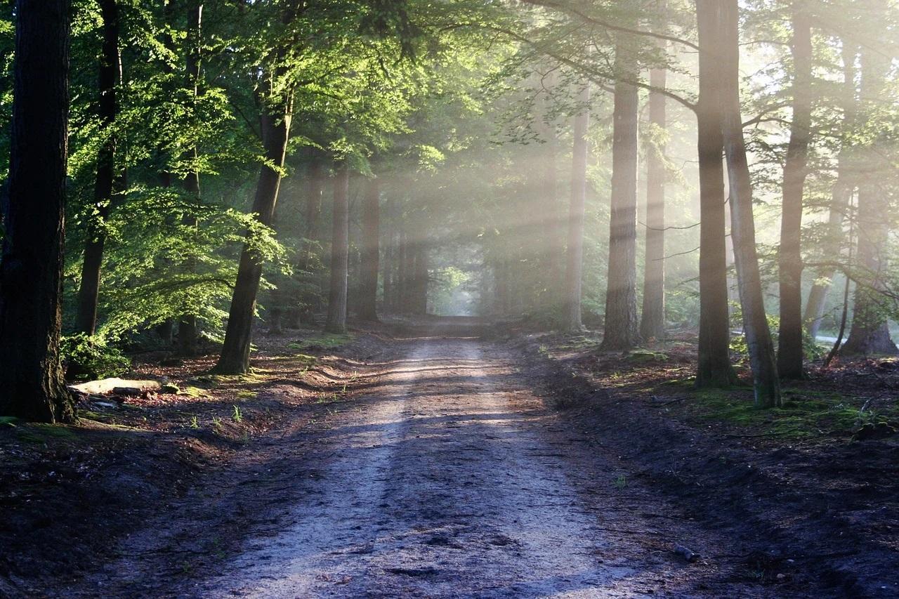 erdő, környezetvédelem,
