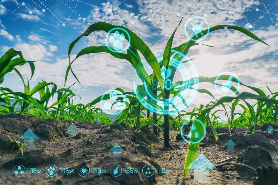 digitalizáció, mezőgazdaság, termés, termelés