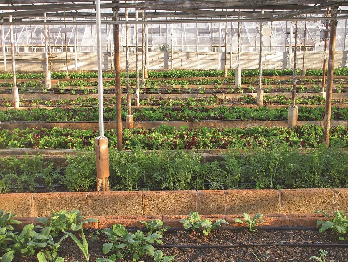 ökológiai gazdaság, gazdaság, gazdálkodás