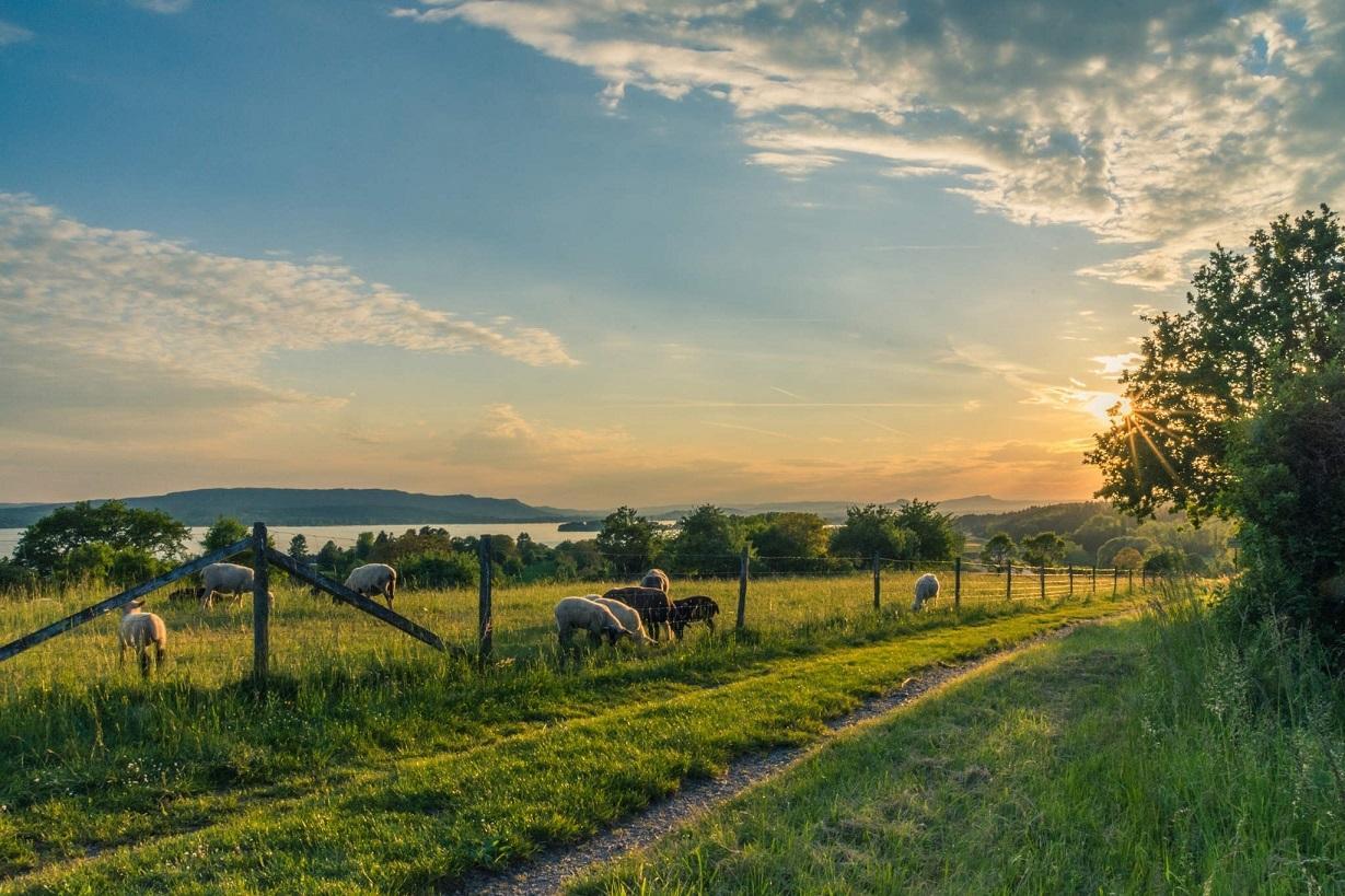 mezőgazdaság, agrár, vidék